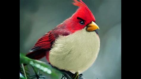natural angry birds youtube