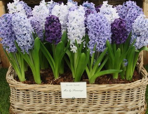 the best time to plant flowering bulbs growing nicely