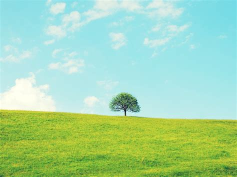 Lonely Little Treesmall Fresh Landscape Wallpaper