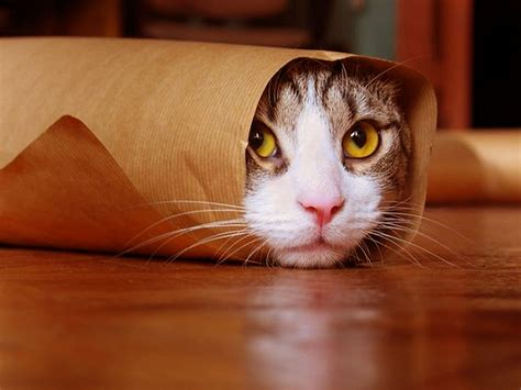 Funny Cat Wallpapers, Pictures, Images