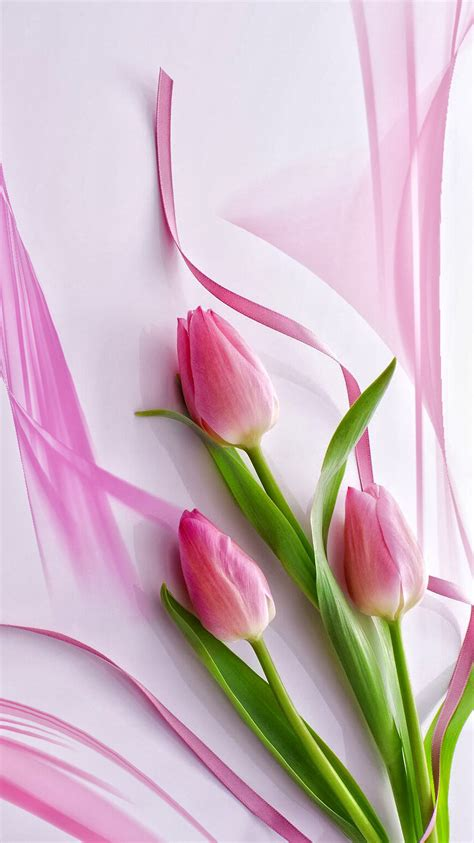 pink tulips wallpaper  images