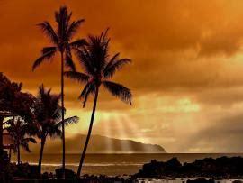 hawaiian  backgrounds   hawaiian