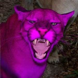 A Real Pink Panther Pictures, Images & Photos Photobucket