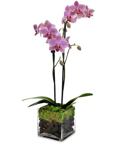orchid centerpiece orchid flower arrangements orchids