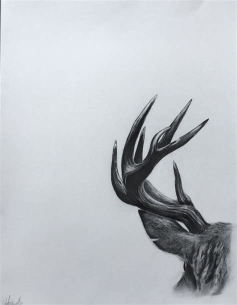 Deer Antler Wildlife Art Print Original Pencil