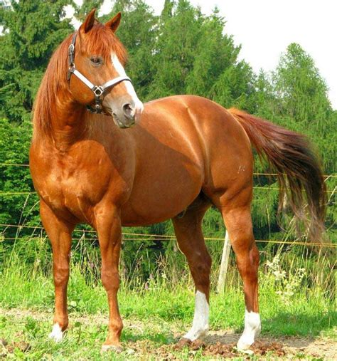 how are horses most expensive horse breeds most luxurious list