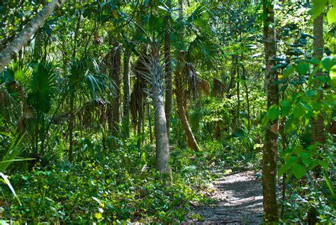 Hammock Florida by Churchhouse Hammock Trail Florida Hikes