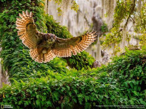 Les Plus Beaux Portraits D'animaux Du National Geographic