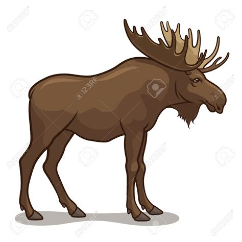 Moose Clip Moose Clipart Realistic Animal Pencil And In Color Moose