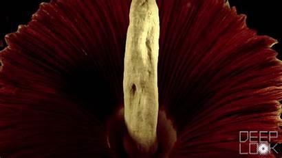 Corpse Flower Dead Flowers Meat Smells Looks