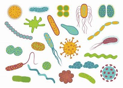Bacteria Germs Background Clip Illustration Flat Vector