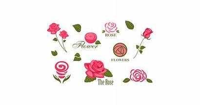 Vector Flower Clipart Roses Graphic Illustration Vectors