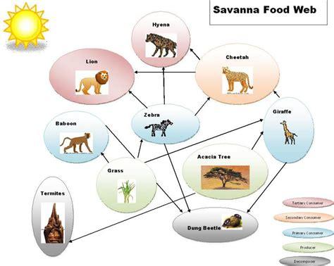 web cuisine savanna food web diagram car interior design