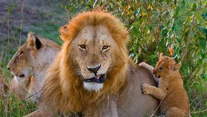 Leo Panthera Bing