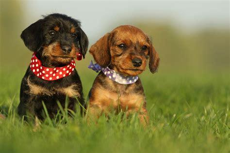 Weitere ideen zu hunde, hund zitat, lustige tiere. Weil´s so süß ist..... Foto & Bild | tiere, haustiere, hunde Bilder auf fotocommunity