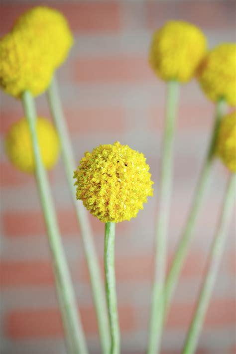24 quot silk billy button craspedia flower spray