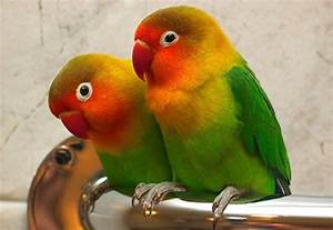 You Are At Home Birds Love Hd Wallpapers Free Download ...