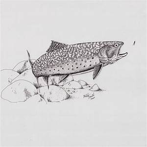 Brook Trout Sketches … Pinteres… - 500x500 - jpeg | Fish ...