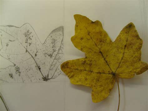 nature drawing leaves   flennkeks  deviantart