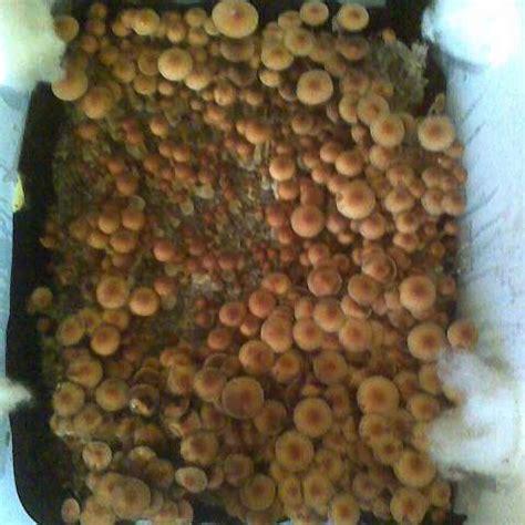 66qt monotub substrate recipe