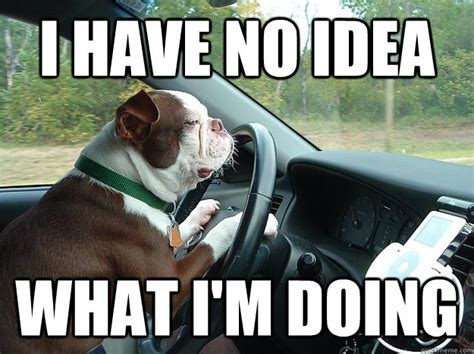 Driving Memes - collection of funny driving quotes and car memes shearcomfort automotive blog