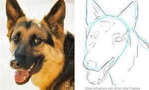 How To Draw A German Shepherd Art Tutorials Pinterest
