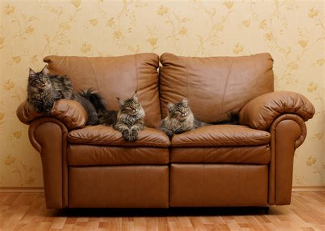 cleaning urine stains  odors  leather furniture