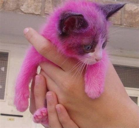 pink cats pink kitty cat