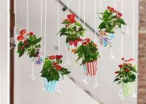 Anthurie Im Wasser : 3x anthuriums ideas like you have never seen before ~ Yasmunasinghe.com Haus und Dekorationen