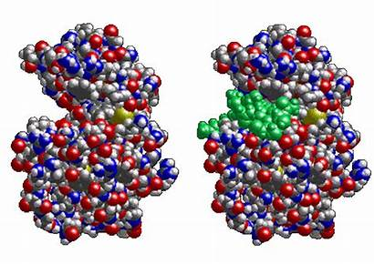 Enzyme Structure Biological Bioreactors Enzymes Engineering Chemical