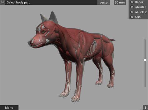 animal anatomy  app references