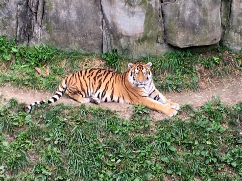 Discounts and Free Days at Columbus Zoo and Aquarium