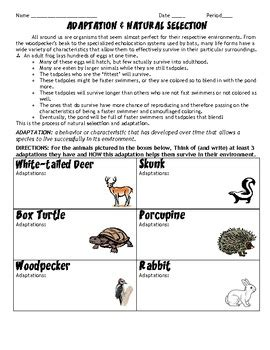 adaptations and selection hw worksheet by