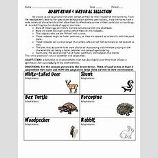 Adaptations And Natural Selection Hwworksheet By Scienceisfun Tpt