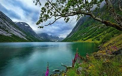 Summer Nature Norway Landscape Lake Grass Wildflowers