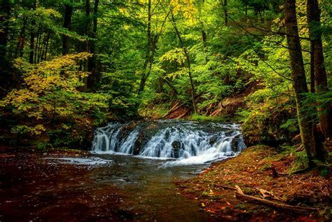 landscape, Plants, River, Forest Wallpapers HD / Desktop ...