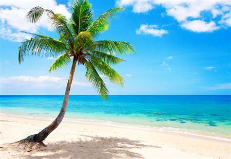 tropical beach desktop background wallpaper on the beach