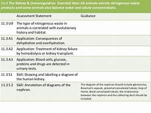 11 3 The Kidney  U0026 Osmoregulation
