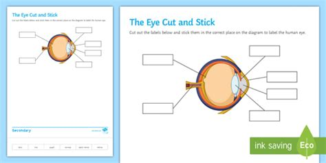 Label Eye Diagram Ks2 by The Eye Cut And Stick Worksheet Worksheet Cut And