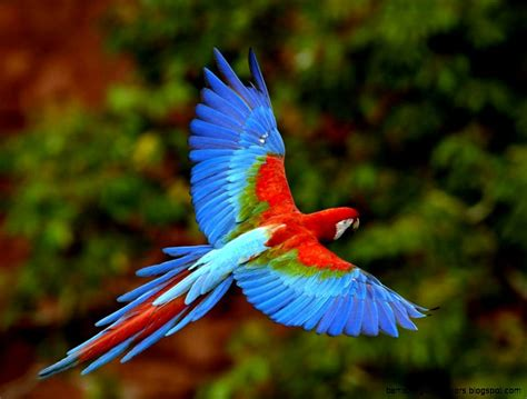 Rainforest Animal Wallpaper - rainforest animal wallpaper amazing wallpapers
