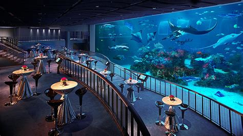 floor and decor dallas s e a aquarium mice singapore