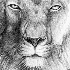 King Lion Head Pencil Art Drawing