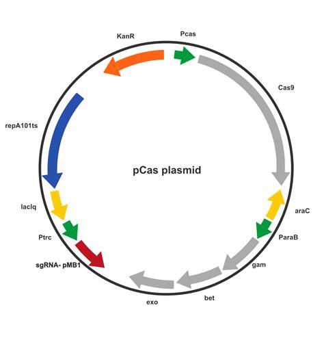 Cytotec Induction Ampicillin Resistance Plasmid E Coli Cipro Online