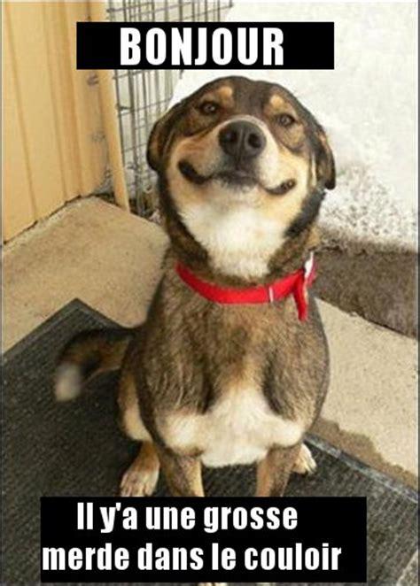 photo humour chien droles