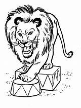 Lion Coloring Pages Coloringpages1001 sketch template
