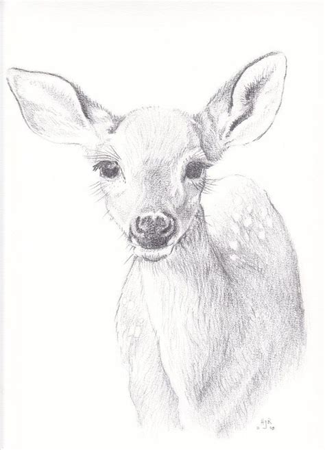 white tailed doe drawing google search pencil