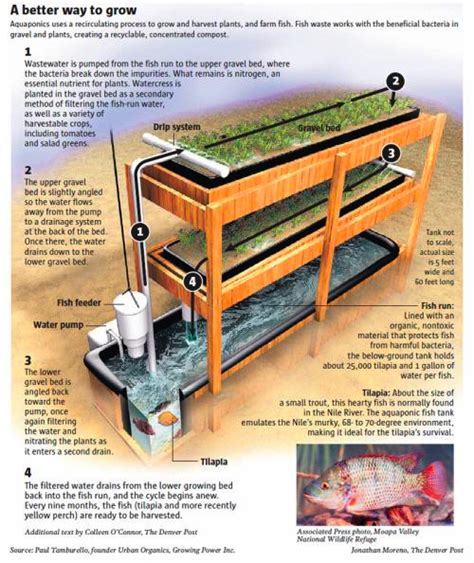 Chop House Kitchen by The Basics Of Aquaponics How Does It Work