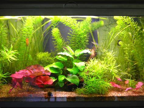 sol nutritif pour aquarium plantes aquarium sans sol nutritif