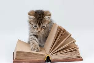 cat books cat with book wallpaper wallpaperspick