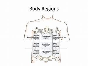 Body Cavities Diagram